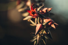 Red Flower and Green Leaves Selective Color Photography Royalty Free Stock Photos