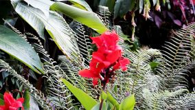 Red Flower And Green Plants Moving With Wind Peru South America stock video