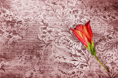 Red flower on grunge background Stock Photos