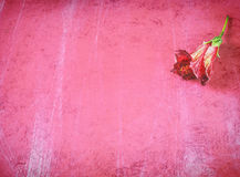 Red flower on grunge background Royalty Free Stock Photography