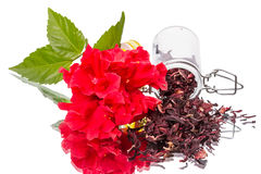 Red flower and hibiscus tea on white Stock Image
