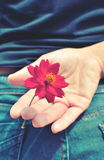 Red flower hidden behind a picture vintage mood. Royalty Free Stock Images