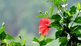 Red flower in a hill top royalty free stock photography