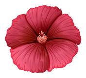 A red flower Stock Photos