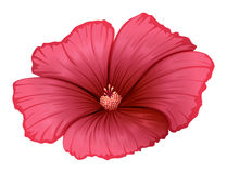 A red flower Royalty Free Stock Image