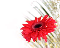 Red Flower In A Bouquet, A Blurry Stock Image