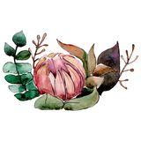 Red flower. Isolated flower illustration element. Background set. Watercolour drawing aquarelle bouquet. Red flower. Floral botanical flower. Isolated flower royalty free illustration