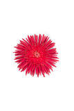 Red flower. Royalty Free Stock Photos