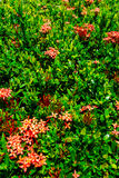 Red flower and leaves pattern Stock Photography