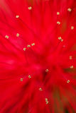 Red flower macro background blur Royalty Free Stock Photography