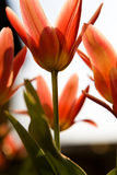 Red flower macro shot Stock Image