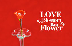 Red flower made of glass on red background with. Love Blossom like a Flower,Love Quote stock images