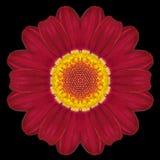 Red Flower Mandala Kaleidoscope Isolated on Black Stock Photos