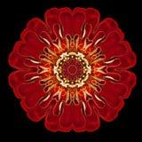 Red Flower Mandala Kaleidoscope Isolated on Black Stock Image