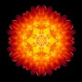 Red Flower Mandala Kaleidoscope Isolated on Black Stock Images