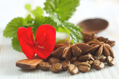 Red flower mint leaf coffee anise food ingredients Royalty Free Stock Photography
