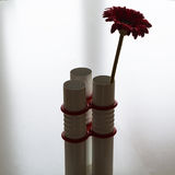 Red flower in modern vase on neutral background Royalty Free Stock Photo