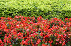 Red flower nature background. Royalty Free Stock Photography