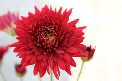 RED FLOWER NATURE WILD LIFE royalty free stock photo