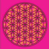 Red Flower Of Life Royalty Free Stock Photography