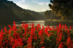 Red flower at Pang-ung. Pang-oong locate at Mae-hong-son province thailand northern. There is a big pond or dam for reservoir water for agriculture for hiltribe Stock Photo