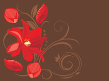 Red flower and petals on the decorative brown background Stock Photos