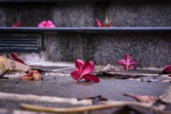 Free Red Flower Petals On A Wet Stair Stock Photo - 130238670