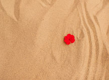 Red flower petals on sand. Y background Stock Photos