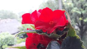 Red flower. Picture of red flower stock photography