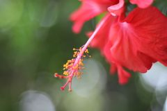 Red flower with pistil Stock Photo