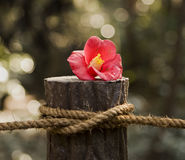 Red Flower On Post With Rope Royalty Free Stock Image
