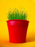 red flower pot with chives Royalty Free Stock Photography