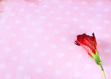 Red flower on retro grunge background Stock Images