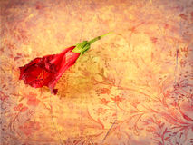 Red flower on retro grunge background Royalty Free Stock Images