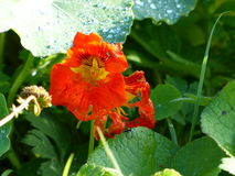 Red flower Sea Green Leaves Stock Images