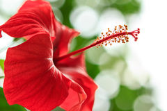 Red flower. Shot in Vasile Fati Botanical Garden, Jibou, Salaj county, Romania Stock Photo