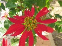 Red flower on shrub. In Andalusia garden stock photography