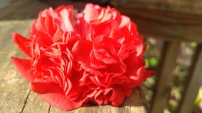 Red Flower. A side view of a floor sitting on a railing royalty free stock photo