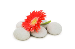 Red flower and spa pebbles Royalty Free Stock Photos