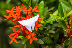 Red flower spike and butterfly from paper Royalty Free Stock Photography