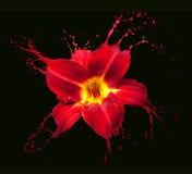 Red flower splashes Royalty Free Stock Photo