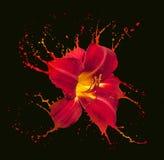 Red flower splashes Stock Image