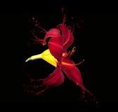 Red flower splashes Stock Photo