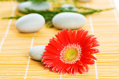 Red flower and stack of pebbles Stock Photos