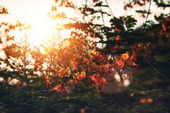 Red flower and sun light. Red flower and sun light in the park Royalty Free Stock Image