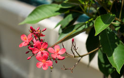 Red flower and tree. The red flower and tree Stock Images
