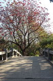 Red flower tree and bridge Royalty Free Stock Photo