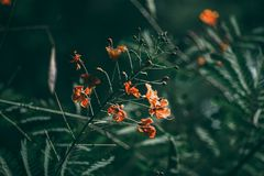 Red flower and tropical green leaf in dark tone. Red flower and tropical green leaf stock photography
