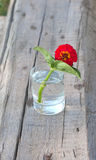 Red flower in the tumbler with  water Stock Photos