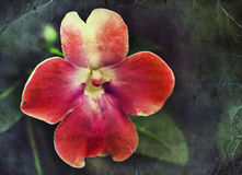 Red flower, unusual spring floral background Stock Photography